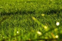Krajobraz zielony pole, wiejski krajobraz Galicia fotografia royalty free