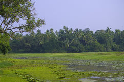 Krajobraz zwrotniki bagno z roślinami Obraz Royalty Free