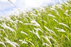 Krajobrazowa łąka, Zdjęcia Royalty Free
