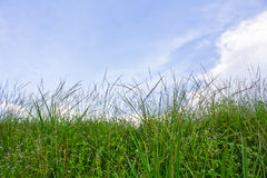 Krajobrazowa łąka Obrazy Stock