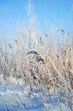 krajobrazowa śnieżna zima Obrazy Royalty Free