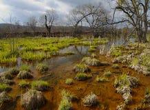 krajobrazowa bagno wiosna Zdjęcia Stock