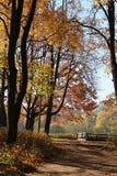 Krajobrazowa droga między drzewami w parku fotografia stock