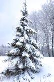 Krajobrazowa droga w zima lesie z śniegiem zakrywającym Obraz Royalty Free