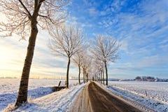 krajobrazowa drogowa drzew biel zima Zdjęcia Royalty Free