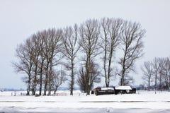krajobrazowa drzew biel zima Zdjęcie Stock