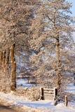 krajobrazowa drzew biel zima Zdjęcia Royalty Free