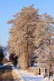 krajobrazowa drzew biel zima Obrazy Stock
