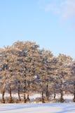 krajobrazowa drzew biel zima Fotografia Stock