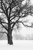 krajobrazowa drzew biel zima Zdjęcia Stock