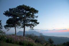 Krajobrazowa drzewna sosna pod niebo zmierzchem Fotografia Stock