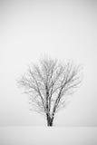 krajobrazowa drzewna zima Zdjęcie Royalty Free