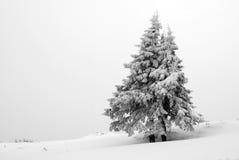 krajobrazowa drzewna zima Obrazy Royalty Free