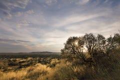 Krajobrazowa fotografia susi krzaki przy zmierzchem z niebieskim niebem i clou Zdjęcie Royalty Free