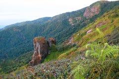 Krajobrazowa góra i las w naturze z chmurą, ludźmi chodzi w zielonym lesie i dużą górą, która czuć dobry Zdjęcia Stock