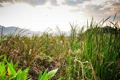 Krajobrazowa góra z stawem Zdjęcie Royalty Free