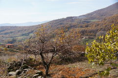 Krajobrazowa Guijo dolina Zdjęcie Stock