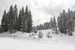 krajobrazowa halna zima Obraz Royalty Free