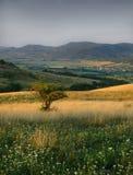 krajobrazowa jesień łąka zdjęcie stock