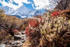 Krajobrazowa jesień Fotografia Royalty Free