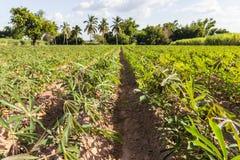 Krajobrazowa kasawa Zdjęcie Royalty Free