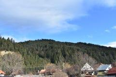 krajobrazowa las sosna Zdjęcia Royalty Free