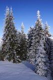 krajobrazowa las zima obrazy royalty free