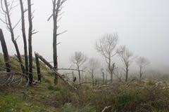 krajobrazowa mgły góra Zdjęcia Stock