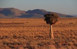 Krajobrazowa Namaqualand przylądka Północna prowincja Południowa Afryka Zdjęcia Royalty Free
