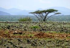 Krajobrazowa natura. Góry w odległości. Osamotniony drzewo na półdupki Zdjęcia Stock