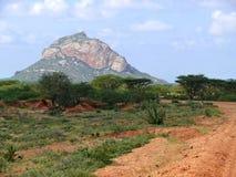 Krajobrazowa natura. Rośliny i drzewa. Afryka, Kenja. Fotografia Royalty Free