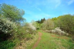 Krajobrazowa niemiec Eifel zdjęcia stock