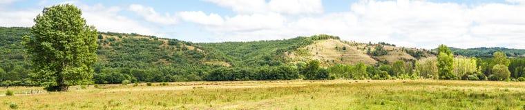 Krajobrazowa panorama łąka i wzgórza z stadem krów pasać obraz royalty free