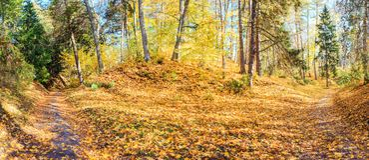 Krajobrazowa panorama jesień park Zdjęcie Royalty Free