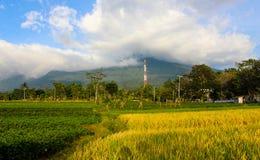 Krajobrazowa piękna góra z padi polem Fotografia Royalty Free