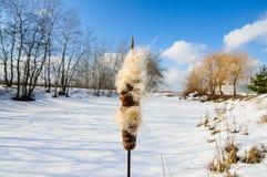 krajobrazowa rosyjska wioski zima Obraz Royalty Free