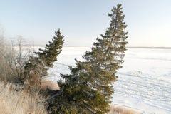 krajobrazowa rosyjska wioski zima Świerczyna na zboczu Obraz Stock