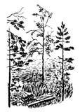krajobrazowa rysunkowa młoda sosny i brzozy ilustracja ilustracji