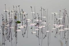 krajobrazowa rzeka Obrazy Royalty Free
