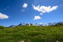 Krajobrazowa scena od Najpierw Grindelwald, Bernese Oberland, Swi Obraz Stock