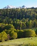 krajobrazowa sceneria Zdjęcia Royalty Free