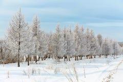 krajobrazowa sceniczna zimy Zdjęcia Stock