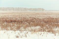 krajobrazowa sceniczna zimy Fotografia Stock