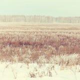 krajobrazowa sceniczna zimy Obraz Stock