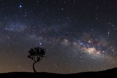 Krajobrazowa sylwetka drzewo z milky sposobu galaxy i przestrzeni dus zdjęcia royalty free