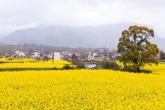 krajobrazowa wiejska wiosna Obrazy Stock