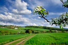 krajobrazowa wiosna Obrazy Stock