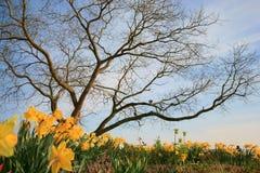 krajobrazowa wiosna Obraz Royalty Free