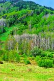 krajobrazowa wiosna Fotografia Royalty Free