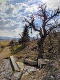 Krajobrazowa wodna wiosna obraz stock